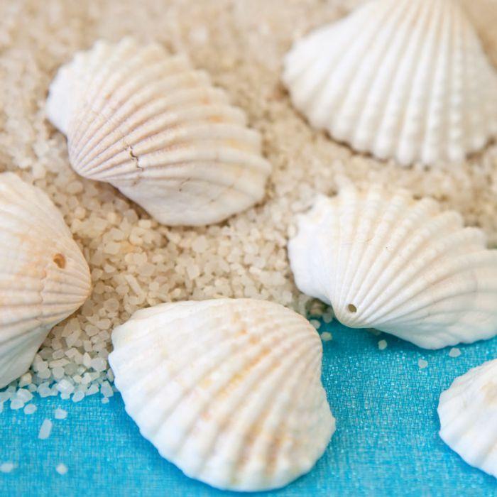 Coquillages d coration de table lot de 12 th me de la mer - Decoration coquillage mer ...